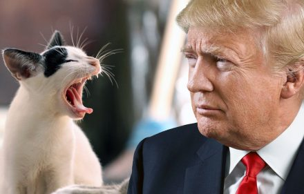 chattes-chats-donald-trump-cat