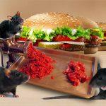 """fastfoods-burger-rats-rat-viande-scandale-mc-donald-secretnews-150x150 Pérou : Un imam s'oppose à la consommation de Cochons d'Inde : """"d'Inde ou d'ailleurs le porc est haram"""""""