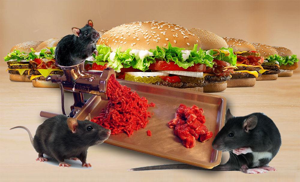 Scandale : De la viande de rat découverte dans + de 76% des burgers testés en Europe