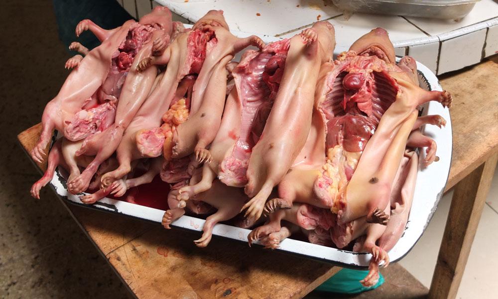 """perou-cobaye-cochon-inde-haram-islam Pérou : Un imam s'oppose à la consommation de Cochons d'Inde : """"d'Inde ou d'ailleurs le porc est haram"""""""