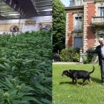 """cannabis-le-pen-montretout-150x150 Marion Le Pen : """"On m'a toujours dit de brosser mes électeurs dans le sens du poil"""""""