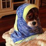 chien-foulard-voile-hijab-islam-150x150 L'imam Chalghoumi annonce qu'il participera au casting de Ninja Warrior