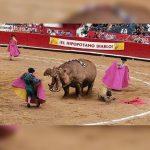 a-hipporrida-corrida-hippopotame-150x150 Le siphon à chantilly classé comme arme de catégorie A par le ministère de l'intérieur
