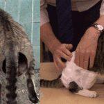chat-viol-animaux-couches-150x150 David Beckham qui caresse son chien ! Est-il zoophile ? Instagram est divisé