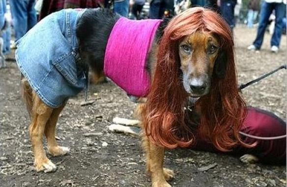 chien-prostitue-danemark Danemark : ouverture de la première maison close zoophile d'Europe - Des chiens livrés à la prostitution