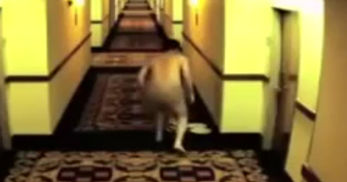 francois-hollande-nu-2 Wikileaks dévoile des photos de François Hollande coincé tout nu dans un hôtel en Russie (Vidéo)
