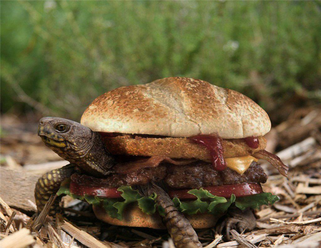 tortue-burger-turtle-chine-1-1024x790 Chine : un restaurant propose des Turtle Burgers, des burgers à base de tortues ... vivantes !