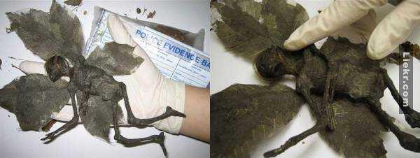 creatures-extraterrestres-londres-incendie Exobioterrorisme : d'étranges créatures découvertes dans les décombres de la tour incendiée à Londres