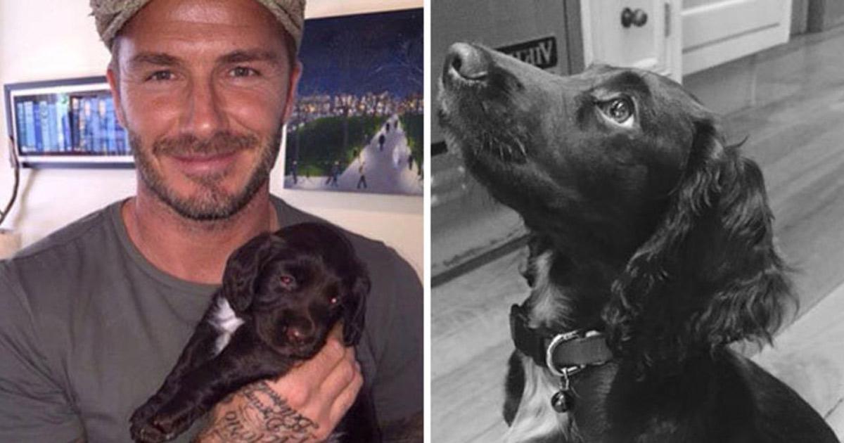 David Beckham qui caresse son chien ! Est-il zoophile ? Instagram est divisé