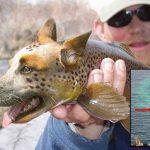 nouvelle-espece-poisson-chien-danube-1-150x150 Le sienche gabonais : premier croisement réussi entre un chien et un chimpanzé, développé pour le déminage antiterroriste