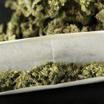 """cannabis-joint-petard-jeunes-pure-150x150 Vol à 350.000 euros :  Edouard Philippe déçu d'avoir mangé """"pas mal de pâtes"""" pendant le trajet"""