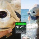 cyborg-requin-espion-camera-secretnews-1-150x150 Donald Trump chasse le requin, tout nu sur son bateau (PHOTOS 18+)