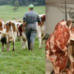pac-taxe-vegan-boucher-150x150 L'américain Bayer/Monsanto veut racheter le groupe laitier Lactalis