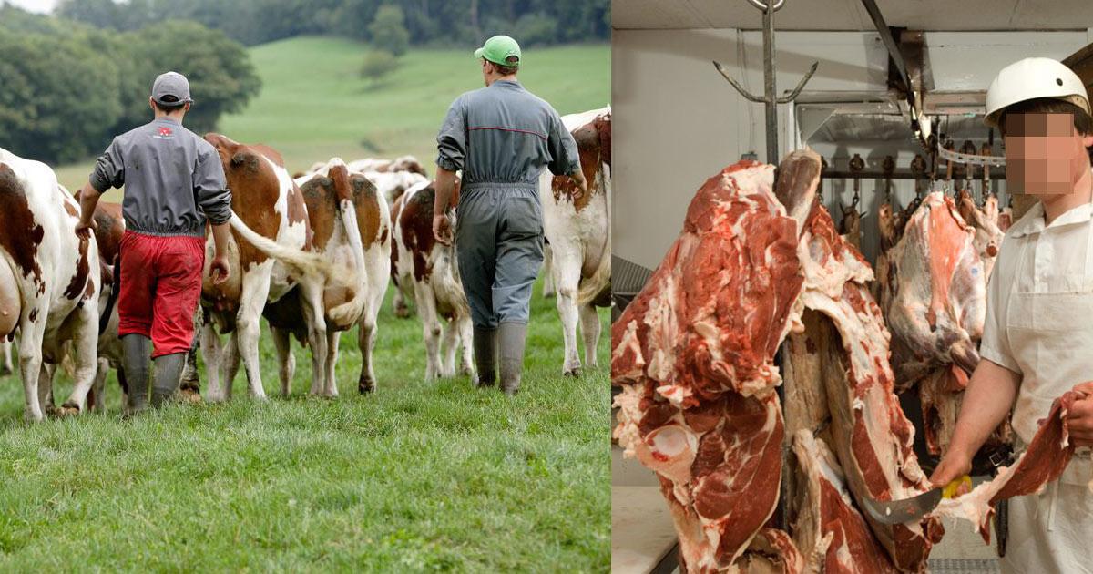 """Europe : Mise en place d'une taxe """"VÉGAN"""" pour sauver les métiers de la viande"""