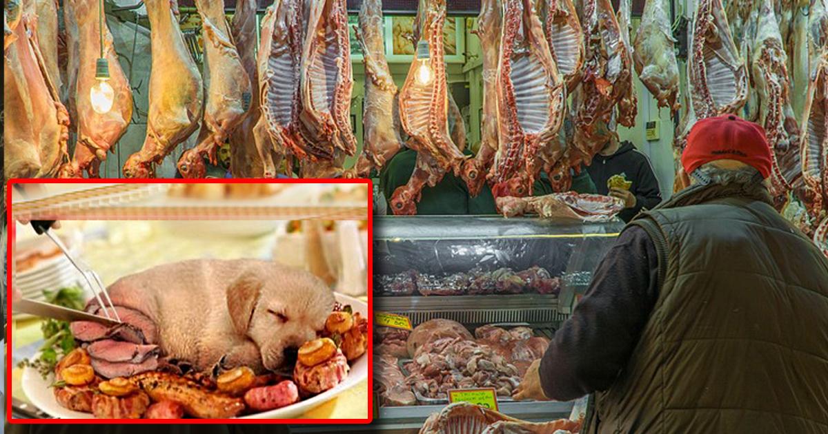 De la viande de chiens bientôt vendue dans la première boucherie canine de France