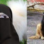 chiens-musulmans-radicalise-secretnews-150x150 Radicalisation: les services de renseignement surveillent de près une cinquantaine de députés