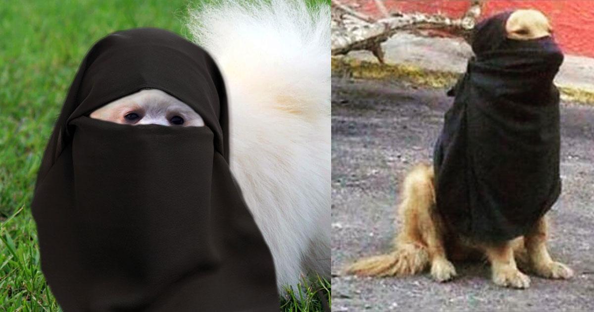 PSYCHO : Nos animaux domestiques peuvent-il se radicaliser? Enquête à la S.P.A.