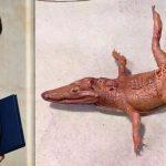 nicolas-hulot-chaussures-bebe-crocodile-secretnews-150x150 Pour éviter les vols a 350.000€, Édouard Philippe a reçu un hélicoptère privé de la part de Nicolas Hulot