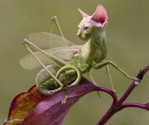 animal-hybride-animaux-zoologie-fake-photoshop-invente-1-1-1-300x253 Zoologie hybride et nouvelles espèces d'animaux
