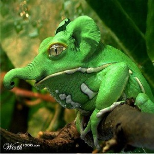 animal-hybride-animaux-zoologie-fake-photoshop-invente-14-300x300 Zoologie hybride et nouvelles espèces d'animaux