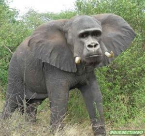 animal-hybride-animaux-zoologie-fake-photoshop-invente-16-300x281 Zoologie hybride et nouvelles espèces d'animaux