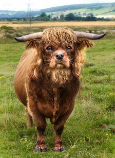 animal-hybride-animaux-zoologie-fake-photoshop-invente-17 Zoologie hybride et nouvelles espèces d'animaux