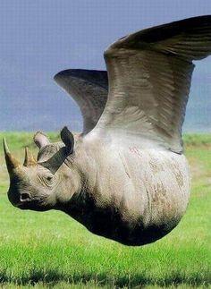 animal-hybride-animaux-zoologie-fake-photoshop-invente-18 Zoologie hybride et nouvelles espèces d'animaux