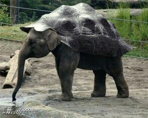 animal-hybride-animaux-zoologie-fake-photoshop-invente-2-300x240 Zoologie hybride et nouvelles espèces d'animaux