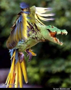 animal-hybride-animaux-zoologie-fake-photoshop-invente-22-300x379 Zoologie hybride et nouvelles espèces d'animaux