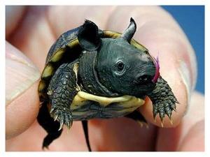 animal-hybride-animaux-zoologie-fake-photoshop-invente-24-300x225 Zoologie hybride et nouvelles espèces d'animaux