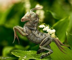 animal-hybride-animaux-zoologie-fake-photoshop-invente-31-300x250 Zoologie hybride et nouvelles espèces d'animaux