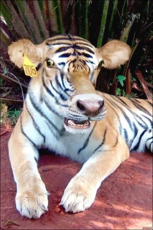 animal-hybride-animaux-zoologie-fake-photoshop-invente-4-300x449 Zoologie hybride et nouvelles espèces d'animaux