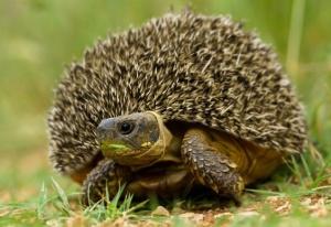 animal-hybride-animaux-zoologie-fake-photoshop-invente-8-1-1-300x206 Zoologie hybride et nouvelles espèces d'animaux