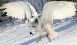 animal-hybride-animaux-zoologie-fake-photoshop-invente-9-300x176 Zoologie hybride et nouvelles espèces d'animaux