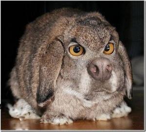 animaux-hybride-zoologie-faux-photoshop-fake-1-300x272 Zoologie hybride et nouvelles espèces d'animaux