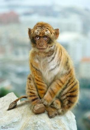 animaux-hybride-zoologie-faux-photoshop-fake-11-300x431 Zoologie hybride et nouvelles espèces d'animaux