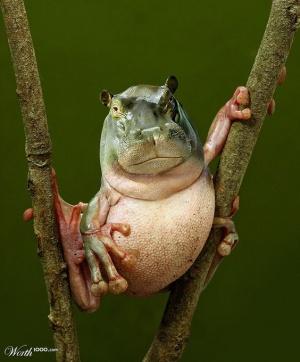 animaux-hybride-zoologie-faux-photoshop-fake-13-300x362 Zoologie hybride et nouvelles espèces d'animaux