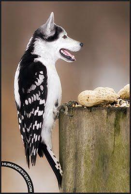 animaux-hybride-zoologie-faux-photoshop-fake-16 Zoologie hybride et nouvelles espèces d'animaux