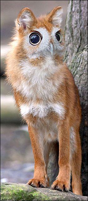 animaux-hybride-zoologie-faux-photoshop-fake-18 Zoologie hybride et nouvelles espèces d'animaux