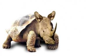 animaux-hybride-zoologie-faux-photoshop-fake-26-300x192 Zoologie hybride et nouvelles espèces d'animaux