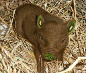 animaux-hybride-zoologie-faux-photoshop-fake-5-1-1-300x253 Zoologie hybride et nouvelles espèces d'animaux