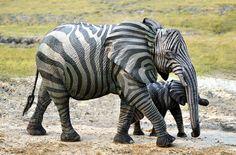 animaux-hybride-zoologie-faux-photoshop-fake-7 Zoologie hybride et nouvelles espèces d'animaux