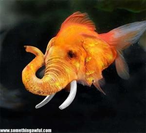 animaux-hybride-zoologie-faux-photoshop-fake-9-300x275 Zoologie hybride et nouvelles espèces d'animaux