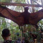 chauve-souris-geante-giant-bat-indonesie-150x150 Emmanuel Macron croise Fabien Barthez en allant voter et l'embrasse sur le crâne