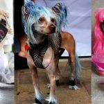 chiens-prostitue-danemark-zoophilie-150x150 Le syndicat des prostitué-e-s de Paris s'oppose à l'ouverture du bordel de poupées en silicone