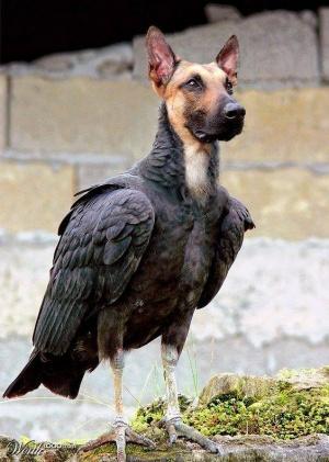 faux-animaux-hybrides-invente-fake-photoshop-1-300x421 Zoologie hybride et nouvelles espèces d'animaux