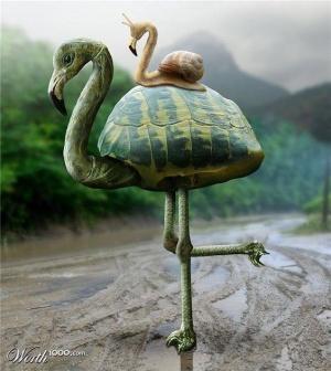 faux-animaux-hybrides-invente-fake-photoshop-100-300x336 Zoologie hybride et nouvelles espèces d'animaux
