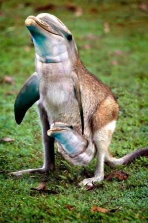 faux-animaux-hybrides-invente-fake-photoshop-101-300x451 Zoologie hybride et nouvelles espèces d'animaux