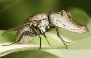 faux-animaux-hybrides-invente-fake-photoshop-15-300x191 Zoologie hybride et nouvelles espèces d'animaux