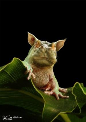 faux-animaux-hybrides-invente-fake-photoshop-2-300x425 Zoologie hybride et nouvelles espèces d'animaux